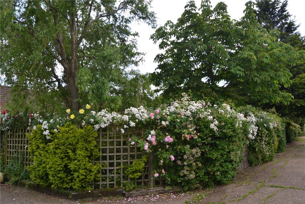 Treetops Gardens