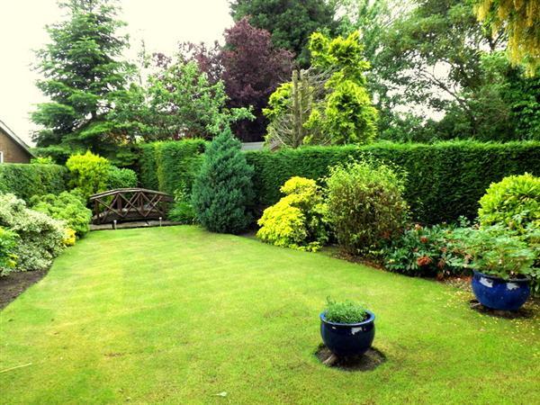 Rear garden mid