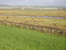Horsey Farm Land