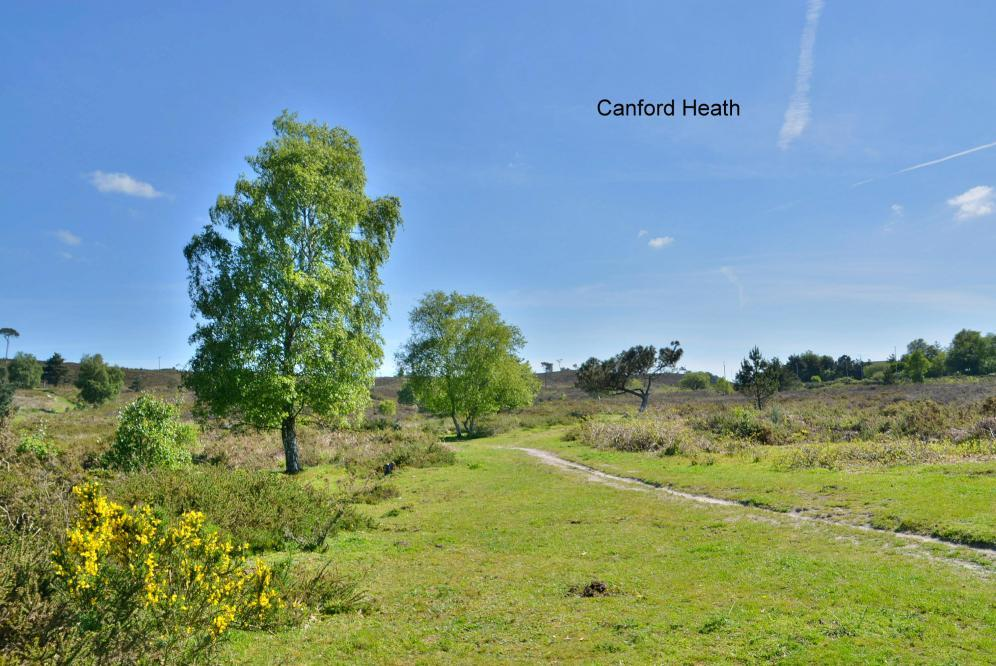 Canford Heath