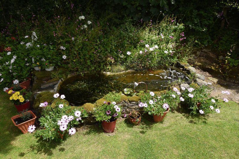 Pond in rear g...