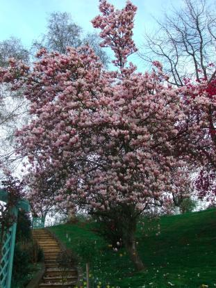 steps to orchard