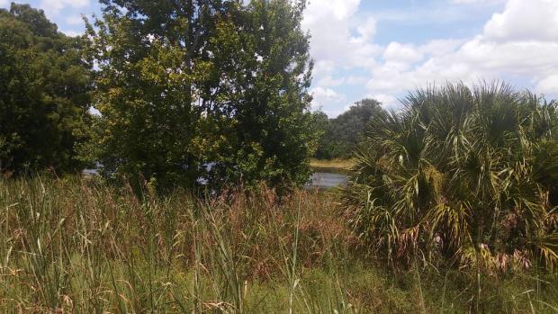 Lake behind lot