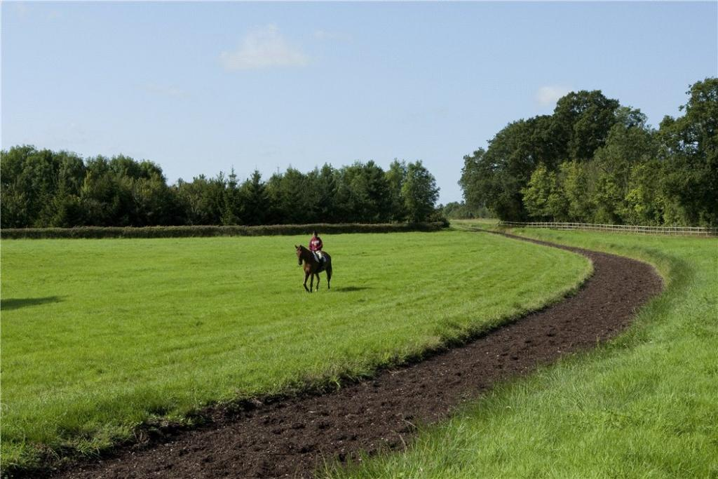 All Weather Gallop