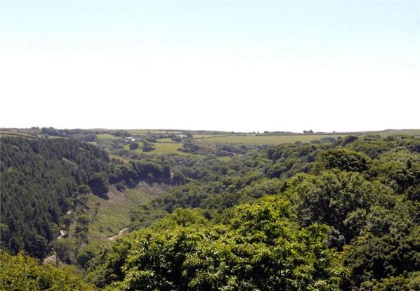 View Over Woodland