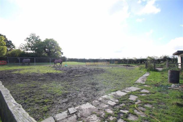Pony paddock: