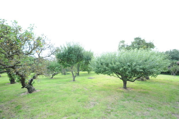 View of an Orchard Opposite Property
