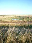 Land in Langenhoe Marsh for sale