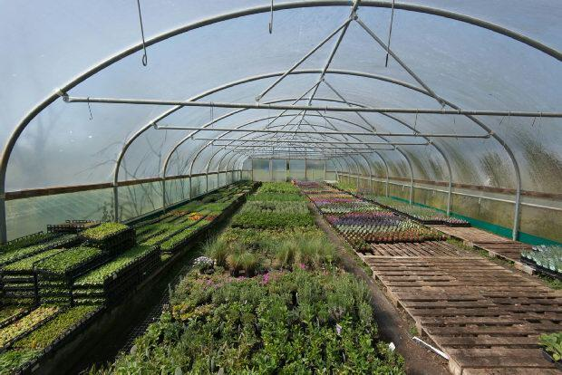 The Polytunnels