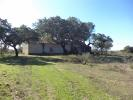 Farm Land in Castelo Branco for sale