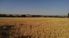 Land for sale in Bildeston