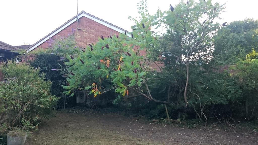 Further Rear Garden