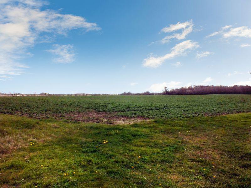 Ducky field