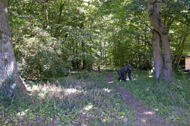 Woodland on grounds