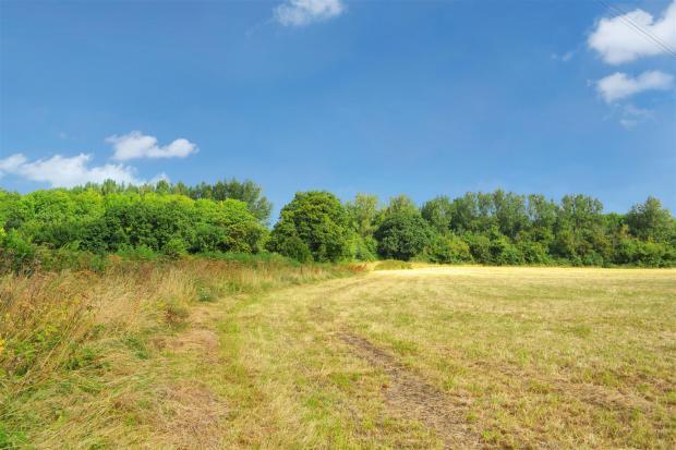 Field View 3.jpg