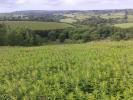 Land adjoining Diptford Downs Land for sale