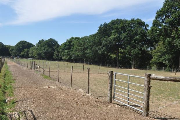 Fields2