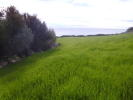 Northern Aegean islands Plot for sale