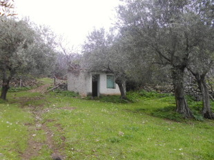 Farm Land in Northern Aegean islands for sale
