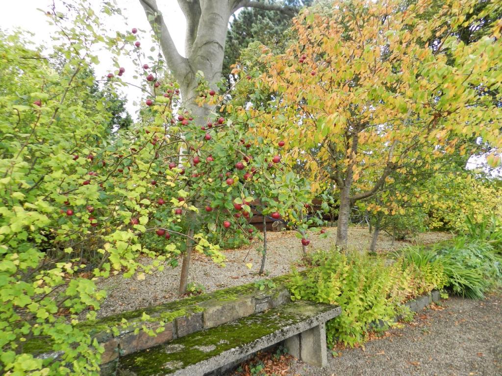 Fruit Trees (Property Image)