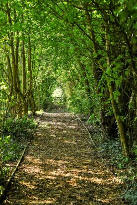 Path To Paddock
