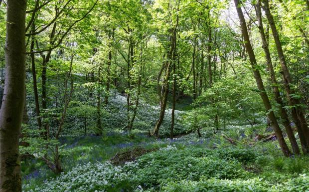 Leeces Wood