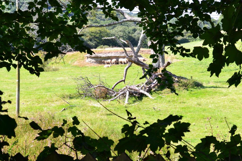 Countryside views from garden