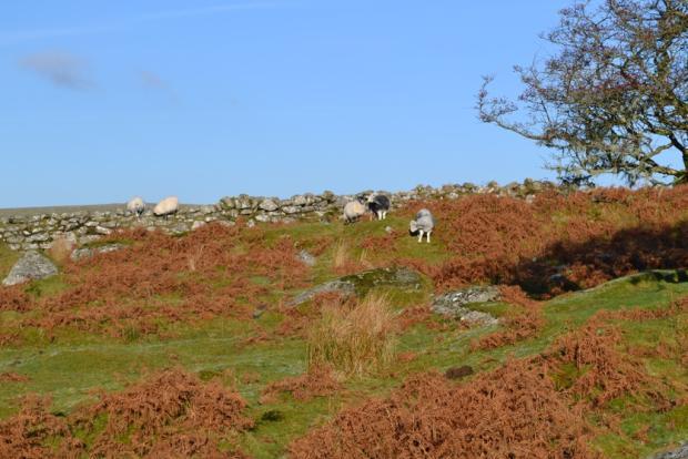 Nearby Bodmin Moor