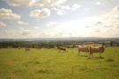 Farm Land in Crieff, Perthshire for sale