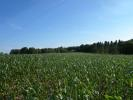 34 acres on Crawley Lane Land for sale