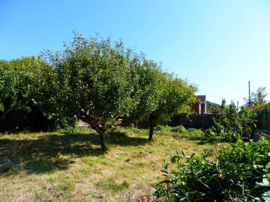 Rear Garden & Orchar