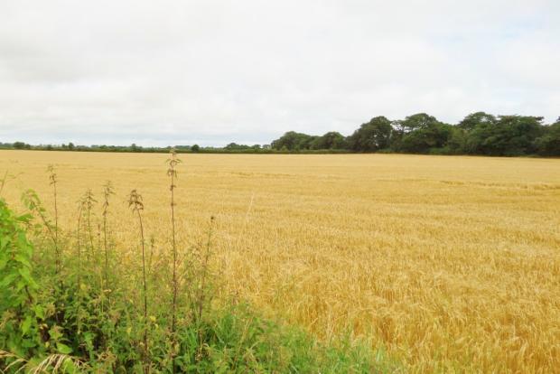 field behind