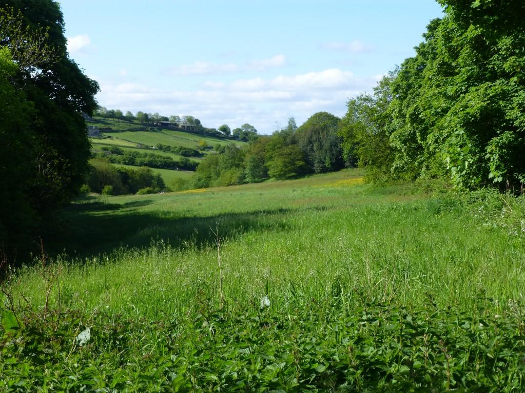 Woodland for sale derbyshire
