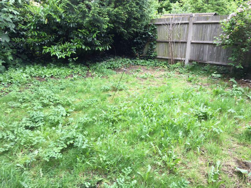 Garden shot 1