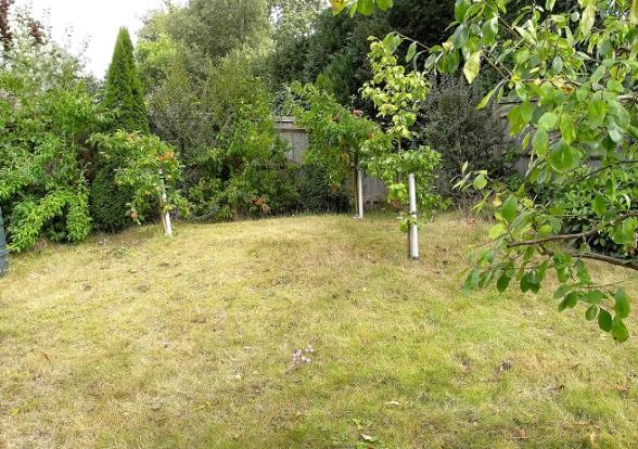 Small orchard area