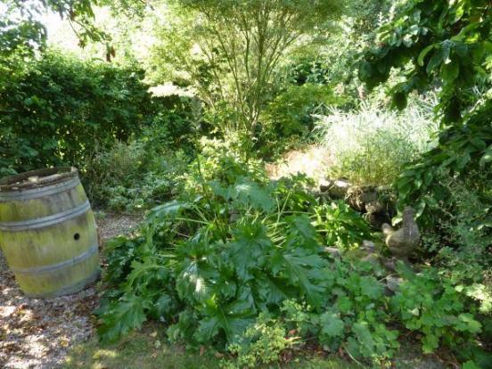Garden...