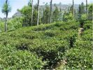 property for sale in Ooty