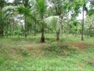 property for sale in Chevayur, Calicut