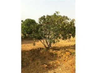 property for sale in Arakkonam