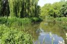 river greenery