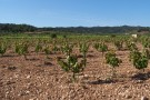 Finca for sale in Catalonia, Tarragona...