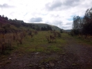 Land for sale in Land Adjacent to Pant...
