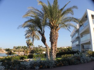 new Apartment for sale in Famagusta, Agia Triada