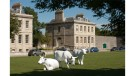 property to rent in Residence One 
