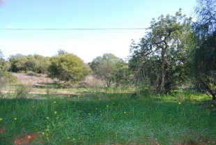 Land in Algarve, Guia for sale