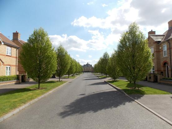 Tree Lined Drives