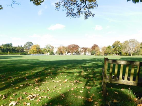 Cricket View