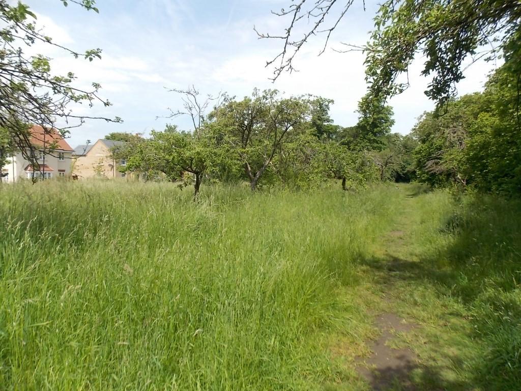 Wild Orchard Walks