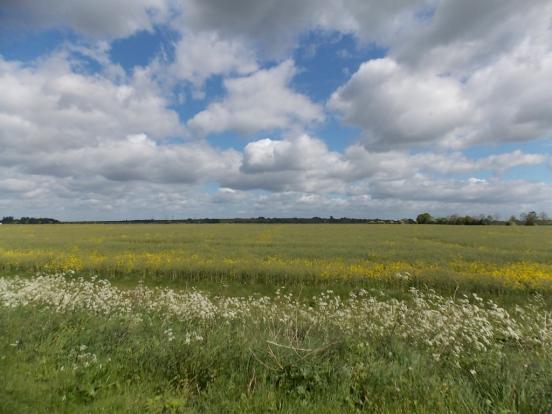 Meadow Walks