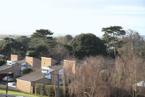 Tree top views